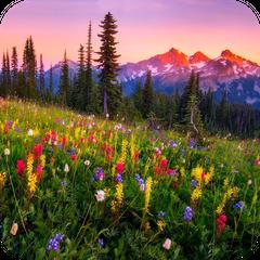Mountain Flowers Live Wallpaper APK