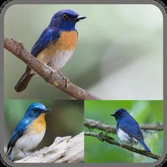Download Kicau Kicau Burung Tledekan Sulingan Apk 1 1 Android For